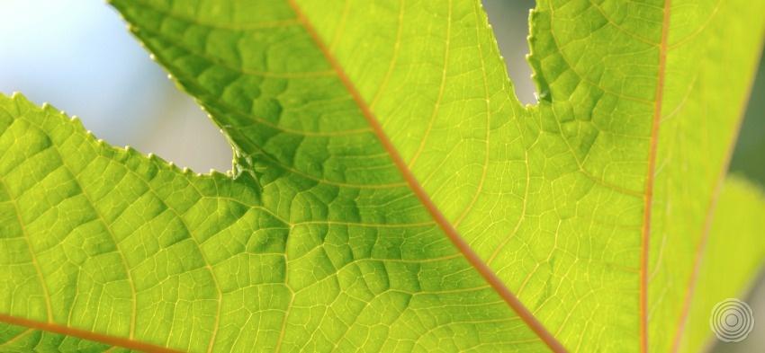 we geloven in natuurlijke producten uniting technology with